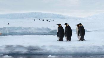 Sanderson Farms TV Spot, 'Penguins' - Thumbnail 1