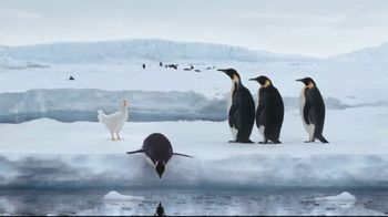 Sanderson Farms TV Spot, 'Penguins' - Thumbnail 6