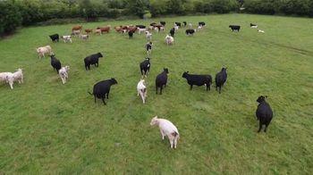 American Humane Association TV Spot, 'Farm PSA' - Thumbnail 1