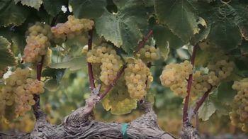 Sonoma-Cutrer Vineyards TV Spot, 'The Beauty of Sonoma-Cutrer' - Thumbnail 8