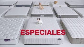 Macy's Venta de Memorial Day TV Spot, 'Perros' [Spanish] - Thumbnail 3