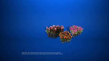 Lowe's TV Spot, 'Gardening Gene: 12-Pack Annuals' - Thumbnail 8