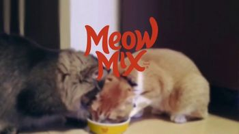 Meow Mix TV Spot, 'We'll Never Figure Them Out' - Thumbnail 6