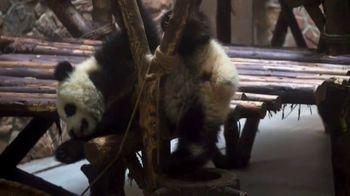 Adventures by Disney TV Spot, 'Peyton Elizabeth Lee Visits the Pandas' - Thumbnail 6