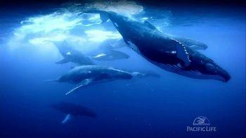 Pacific Life TV Spot, 'Tail Slaps'