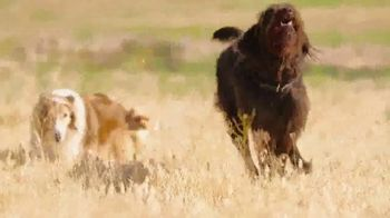 Blue Buffalo Freedom TV Spot, 'Free to Be Their Best' - Thumbnail 5