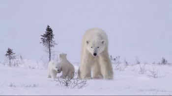 World Wildlife Fund TV Spot, 'Protect the Arctic's Future' - Thumbnail 1