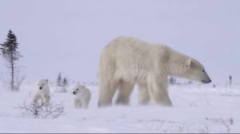 World Wildlife Fund TV Spot, 'Protect the Arctic's Future' - Thumbnail 2