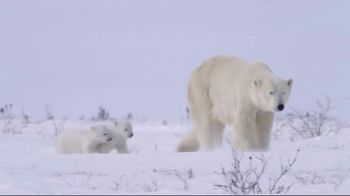 World Wildlife Fund TV Spot, \'Protect the Arctic\'s Future\'