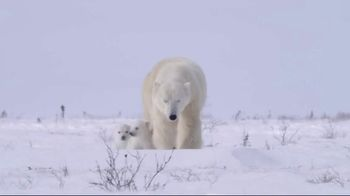 World Wildlife Fund TV Spot, 'Protect the Arctic's Future' - Thumbnail 4
