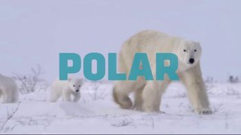 World Wildlife Fund TV Spot, 'Protect the Arctic's Future' - Thumbnail 5