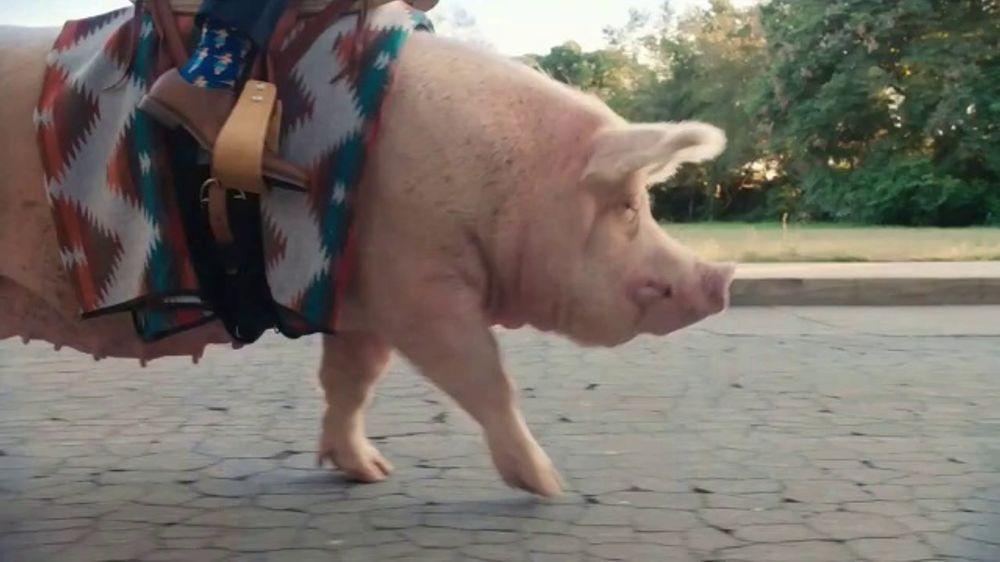 State Farm Accident Forgiveness >> The General TV Commercial, 'Nice Hog' - iSpot.tv