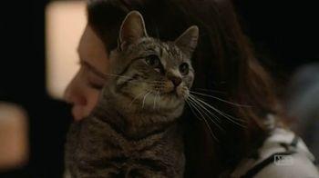 TBS: Cat Threats thumbnail