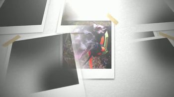 Ugly Dog Hunting TV Spot, 'Bird-Hunting Gear' - Thumbnail 3