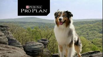 Purina Pro Plan TV Spot, \'Possibilities\'