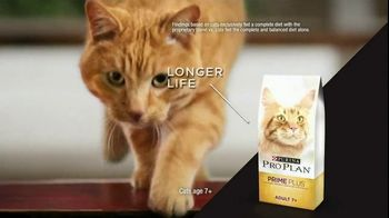 Purina Pro Plan TV Spot, 'Possibilities' - Thumbnail 5