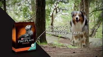 Purina Pro Plan TV Spot, 'Possibilities' - Thumbnail 8