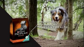 Purina Pro Plan TV Spot, 'Possibilities' - Thumbnail 9