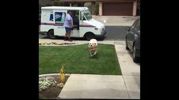 BarkBox National Dog Day Sale TV Spot, 'New Toy' - Thumbnail 1