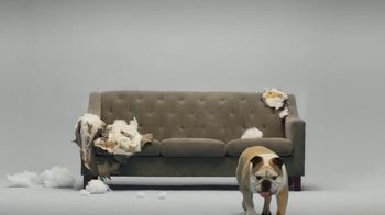 Super Chewer National Dog Day Sale TV Spot, 'Cheaper Than a New Couch'