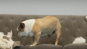 Super Chewer National Dog Day Sale TV Spot, 'Cheaper Than a New Couch' - Thumbnail 4