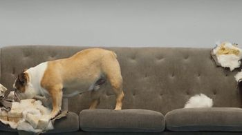 Super Chewer National Dog Day Sale TV Spot, 'Cheaper Than a New Couch' - Thumbnail 5