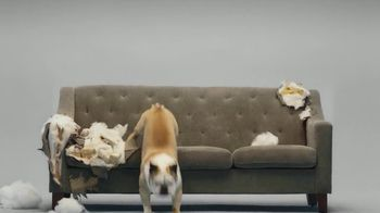 Super Chewer National Dog Day Sale TV Spot, 'Cheaper Than a New Couch' - Thumbnail 7