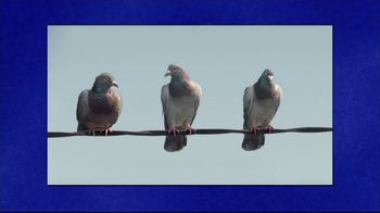 GEICO TV Spot, 'Jeopardy!: Pigeons Fire at Will' - 2 commercial airings