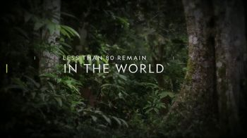 National Geographic TV Spot, 'Save the Sumatran Rhino' - Thumbnail 1