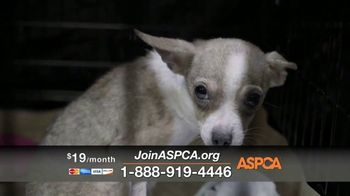 ASPCA TV Spot, 'If They Had a Voice' Featuring Eric McCormack - Thumbnail 6