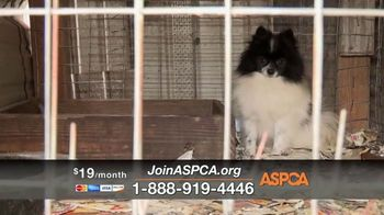 ASPCA TV Spot, 'If They Had a Voice' Featuring Eric McCormack - Thumbnail 7