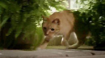 Blue Buffalo BLUE Wilderness TV Spot, 'Lynx Hunger' - Thumbnail 6