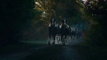 Budweiser Reserve Collection Copper Lager TV Spot, 'Introducing' - Thumbnail 4