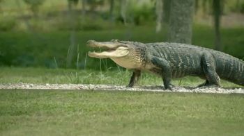 Popeyes TV Spot, 'Never Rush Gators and Making Chicken' - 4653 commercial airings