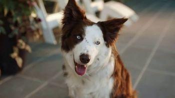 PetComfort Feeding System TV Spot, 'Raise Your Paw' - Thumbnail 1