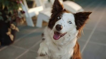 PetComfort Feeding System TV Spot, 'Raise Your Paw' - Thumbnail 2