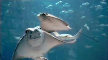 SeaWorld TV Spot, 'Descubre lo nuevo' [Spanish] - 38 commercial airings