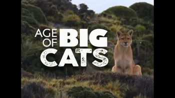 CuriosityStream TV Spot, 'Age of Big Cats' - 450 commercial airings