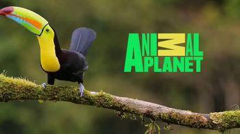 Ultra Downy TV Spot, 'Animal Planet: Strut Your Stuff' - Thumbnail 9