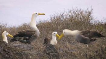 Ultra Downy TV Spot, 'Animal Planet: Strut Your Stuff' - Thumbnail 8