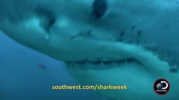 Southwest Airlines Dare to Dive Sweepstakes TV Spot, 'Shark Week' - Thumbnail 5