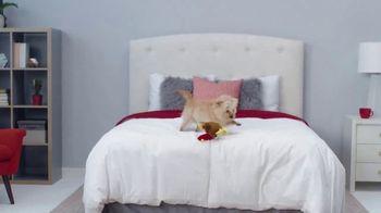 Mattress Firm Black Friday Doorbusters TV Spot, 'Early Access: Beautyrest Queens & Body Pillows' - Thumbnail 9