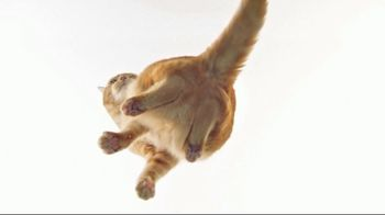 Fresh Step Clean Paws TV Spot, 'Cat on Glass'