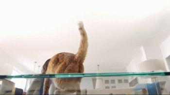 Fresh Step Clean Paws TV Spot, 'Cat on Glass' - Thumbnail 5