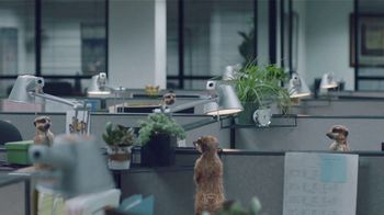 GEICO TV Spot, \'Meerkats Spread Office Gossip\'