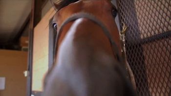 Audible Inc. TV Spot, 'Cheer for Audible the Racehorse' - Thumbnail 9