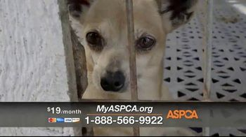 ASPCA TV Spot, 'New Donors Urgently Needed' - Thumbnail 3