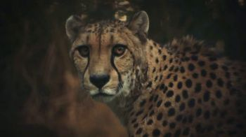 World Wildlife Fund TV Spot, 'They Can't Go On Without You' Song by Kaleo