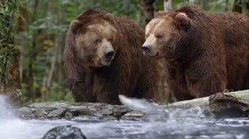 Hungry Bears thumbnail