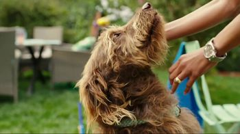 JCPenney TV Spot, 'Summer Savings for the Family'  Song by Redbone - 930 commercial airings